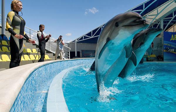 вакансии тренера дельфинарий крым салатов моцареллой весьма