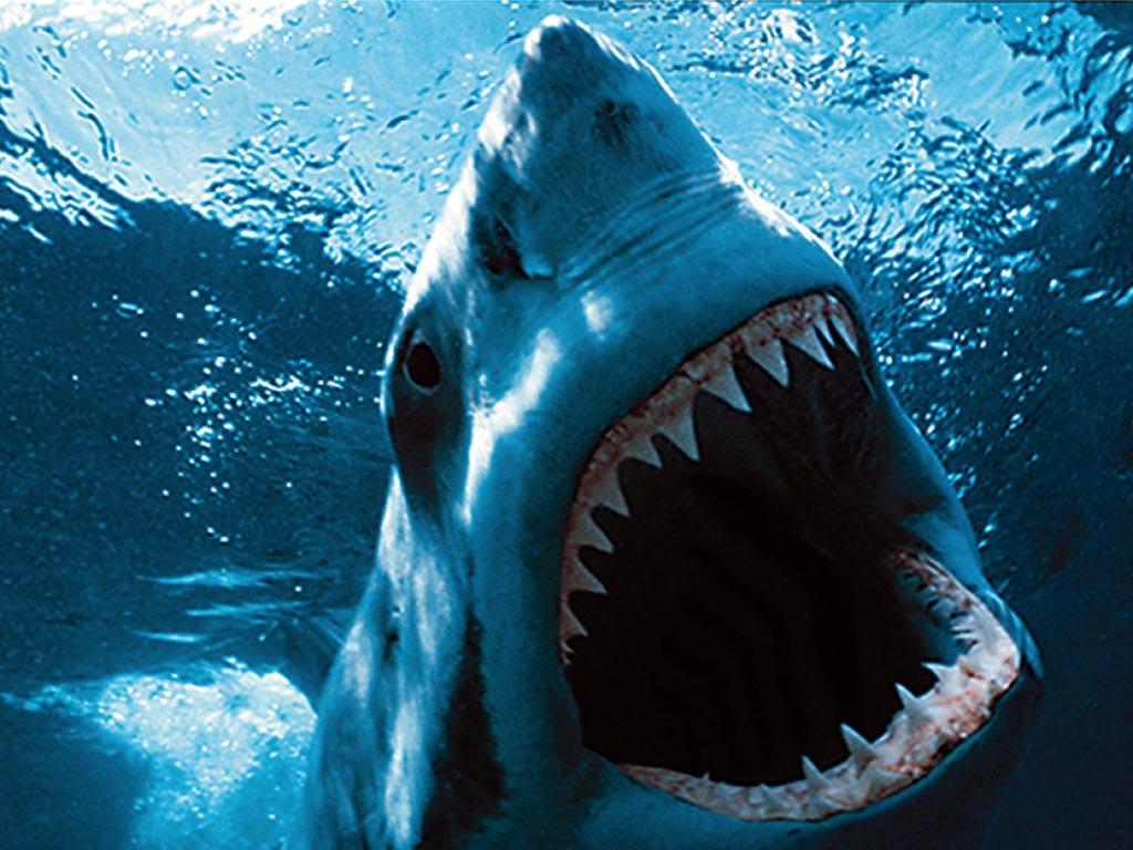 скачать акулы торрент - фото 10